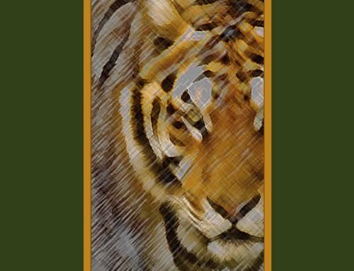 Libro de poesía el año del tigre